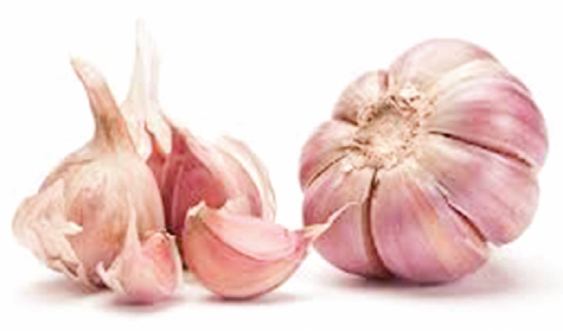 Experts confirm healing powers of garlic