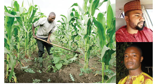 Armyworm: FAO cautions farmers on pesticides