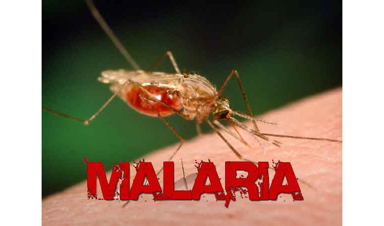 Campaigns crucial in fight against malaria –HEDEN