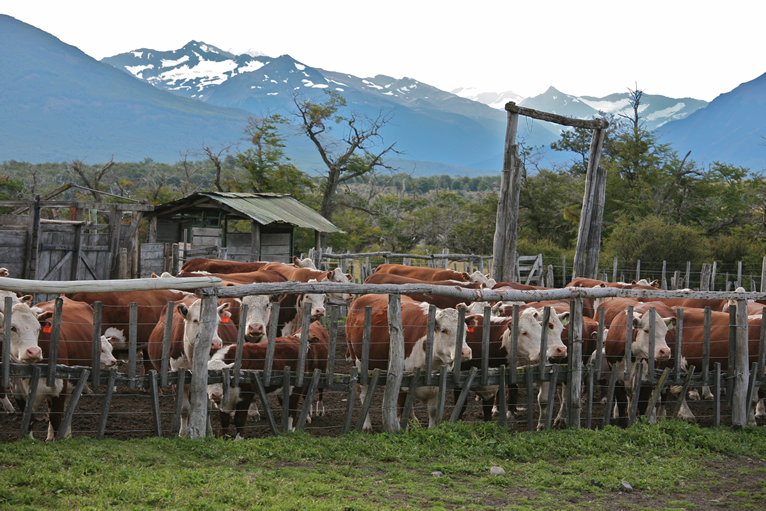 We will not condone Cattle Rustling in Kogi – Government