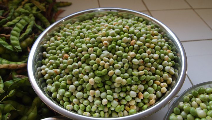 Nigeria to export pigeon pea worth $100bn to India -NAQS