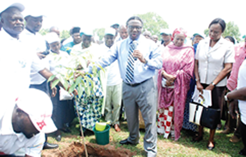 WED: Plant a tree, save environment