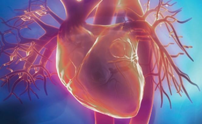 Avoiding world's number one killer, cardiovascular disease