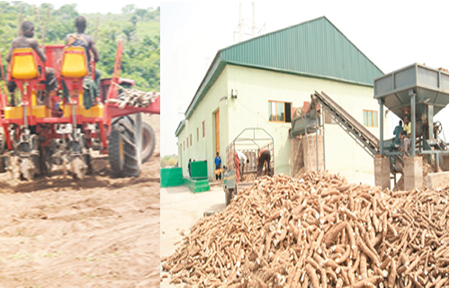 Cassava as elixir for Nigeria's industrial growth