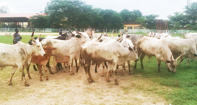 2 killed, 70 cows rustled in Plateau