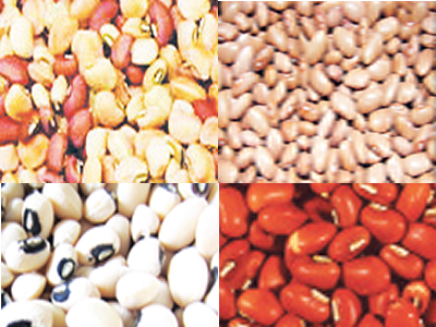 Pressure mounts on NASS over GMO beans