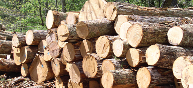 Timbers: Illegal export triggers int'l probe