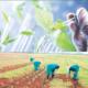 Biotechnology: Gateway to Nigeria's food sufficiency