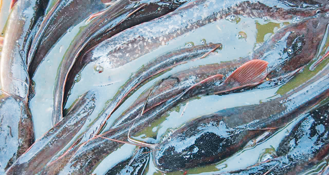 Fish farming: The untapped goldmine